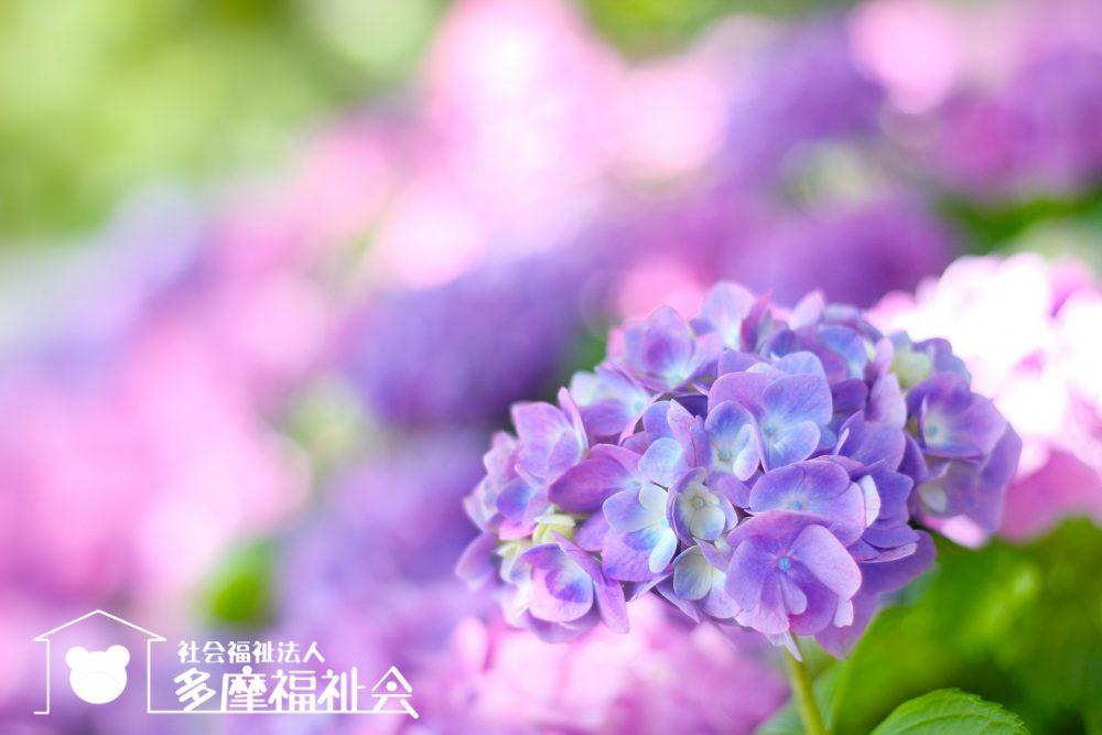 ♬永山小学童クラブ 6月のおたより♬